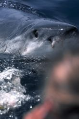 Copyright © by Andreas Michael Serec